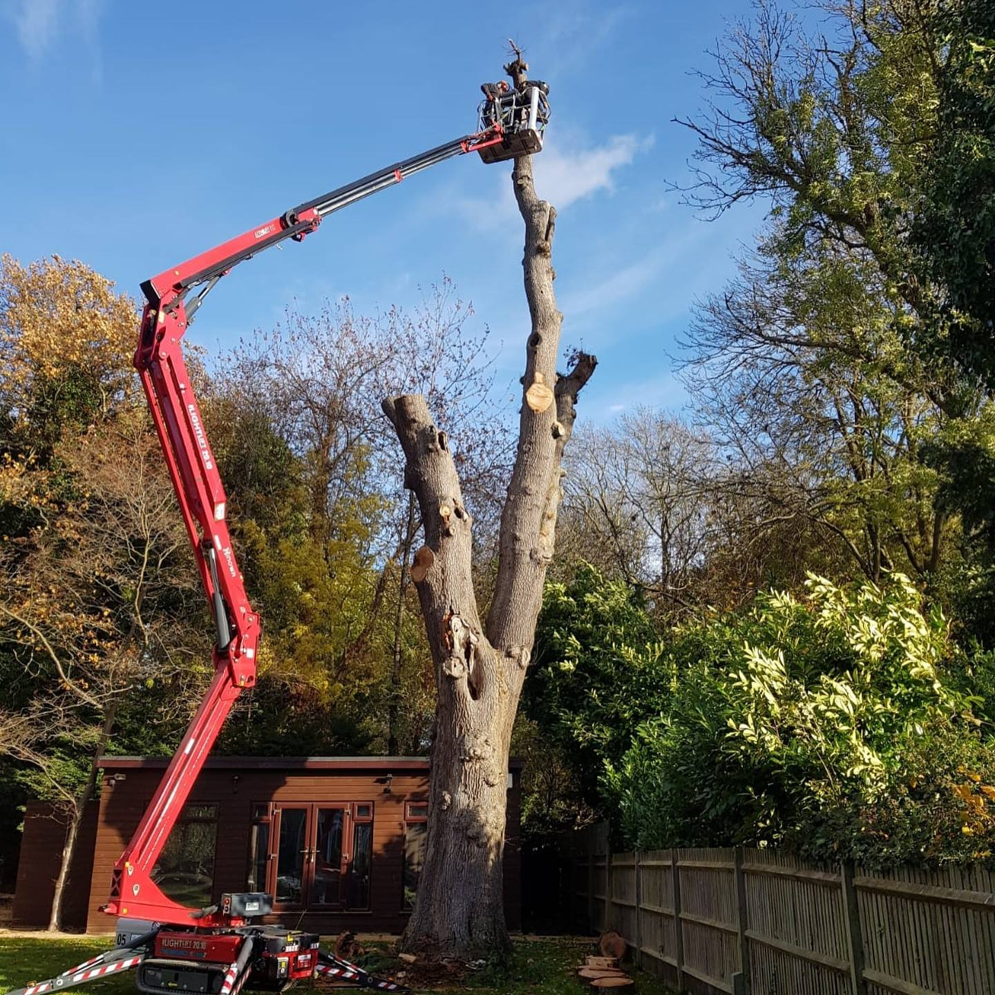 Removal of dangerous oak tree