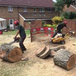 Cutting and stump grinding