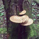 Fungus growing on tree