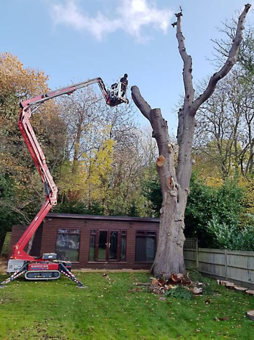 Tree felling in progress