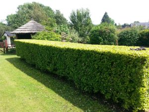 Why and when to prune your hedge